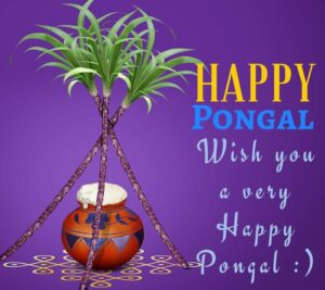 happy pongal hd images free download