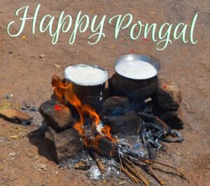 happy pongal 2022 hd images free download