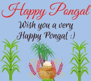 happy pongal photos hd