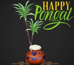 happy pongal pictures download
