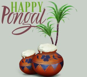 happy pongal pictures free download