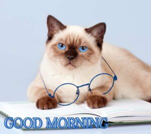 good morning cats images