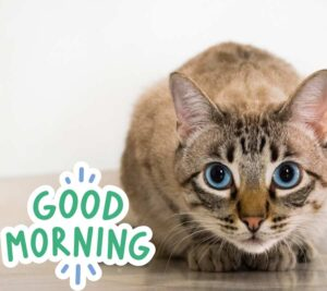 good morning cat images