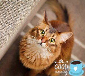 cat images hd wallpaper