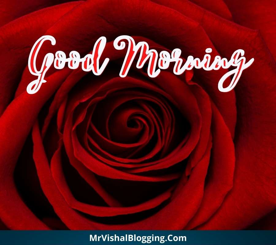 good morning rose images download HD free for facebook whatsapp
