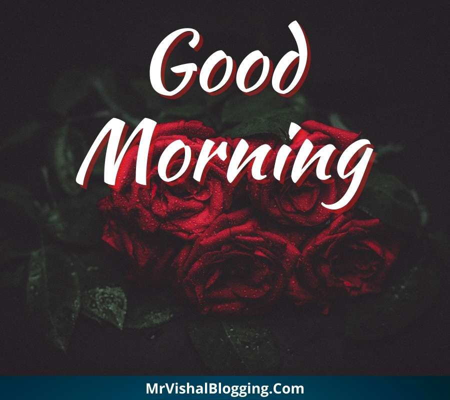 good morning red rose images download
