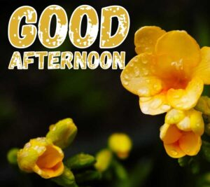 good afternoon images for facebook