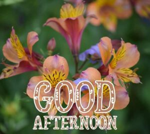 good afternoon images download