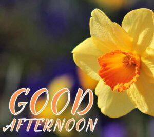 good afternoon hd photos