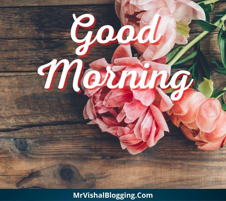 good morning rose photos download