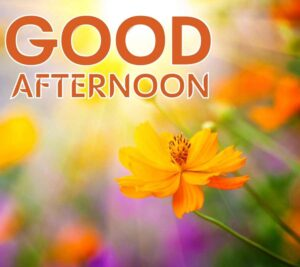 good afternoon wallpaper download