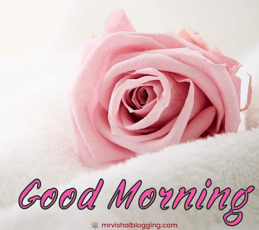 good morning romantic rose download.