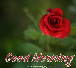 good morning romantic rose download.