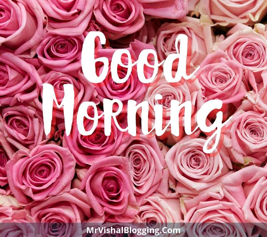 love good morning rose images download