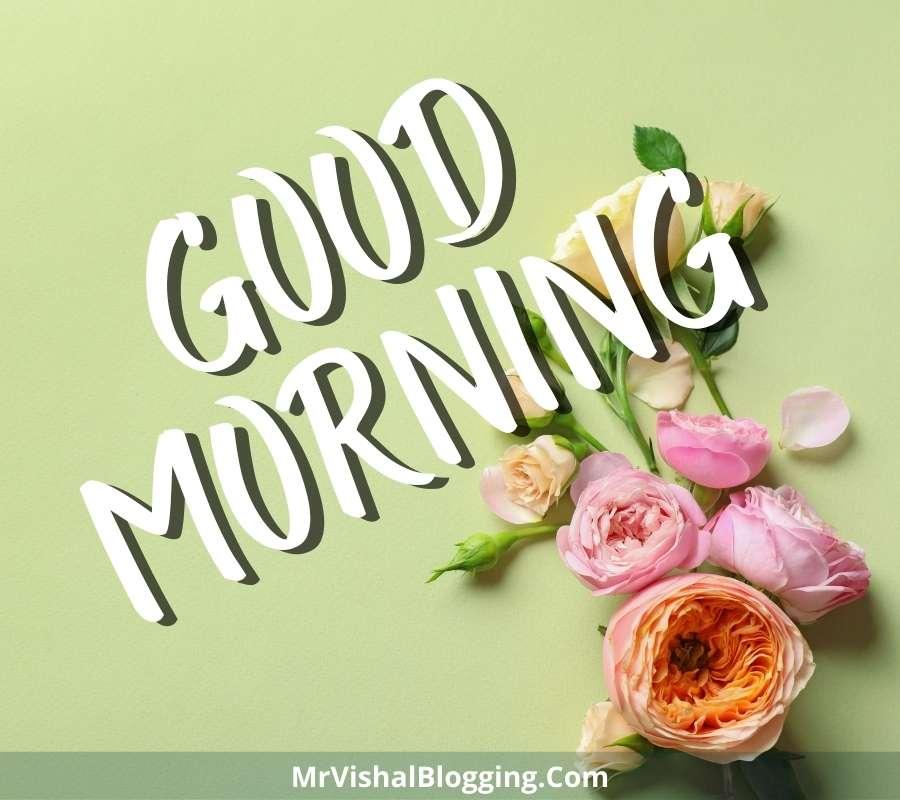 hd wallpaper good morning rose images download