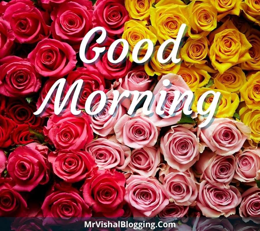 rose good morning images hd 1080p download