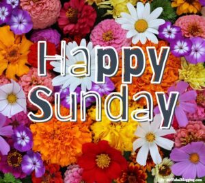 happy sunday hd images