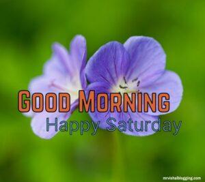happy saturday good morning greetings