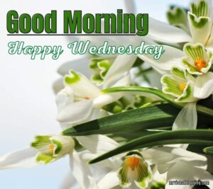Good Morning Happy Wednesday Images HD Download