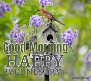 Happy Wednesday Images With Flowers And Birds
