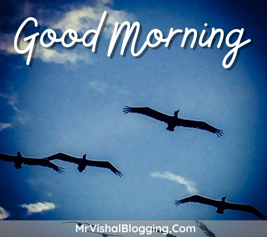 good morning photos flowers birds