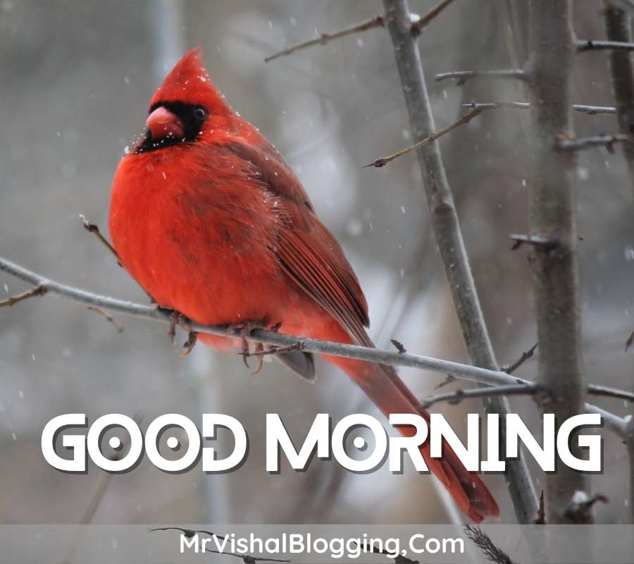 gd morning pics download with birds download