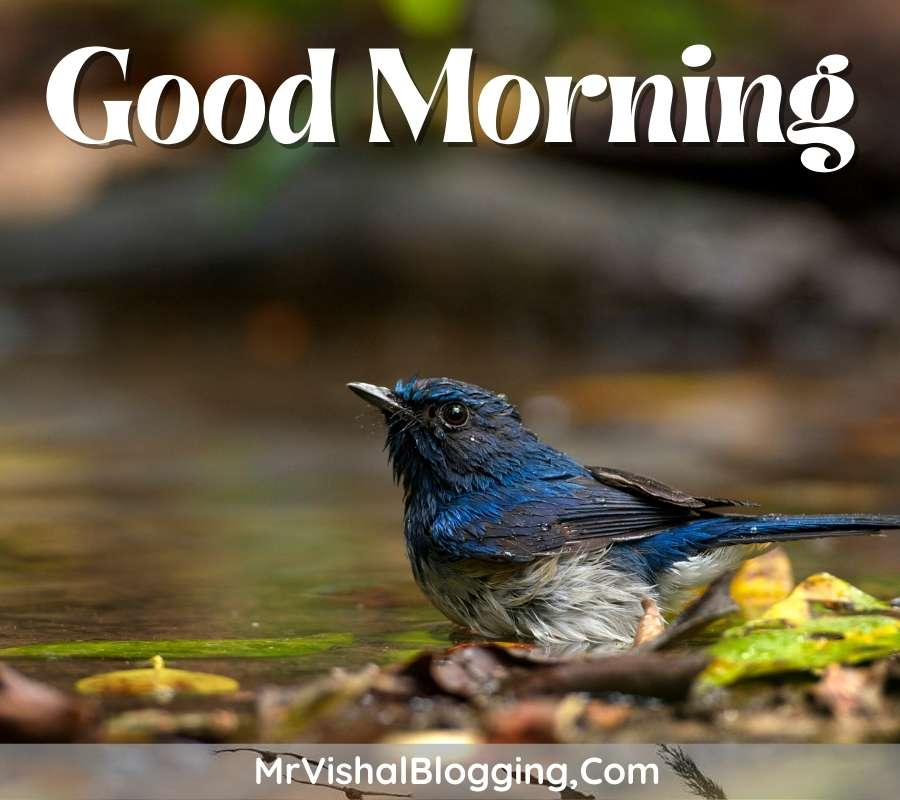 gd morning pictures download with birds for whatsapp