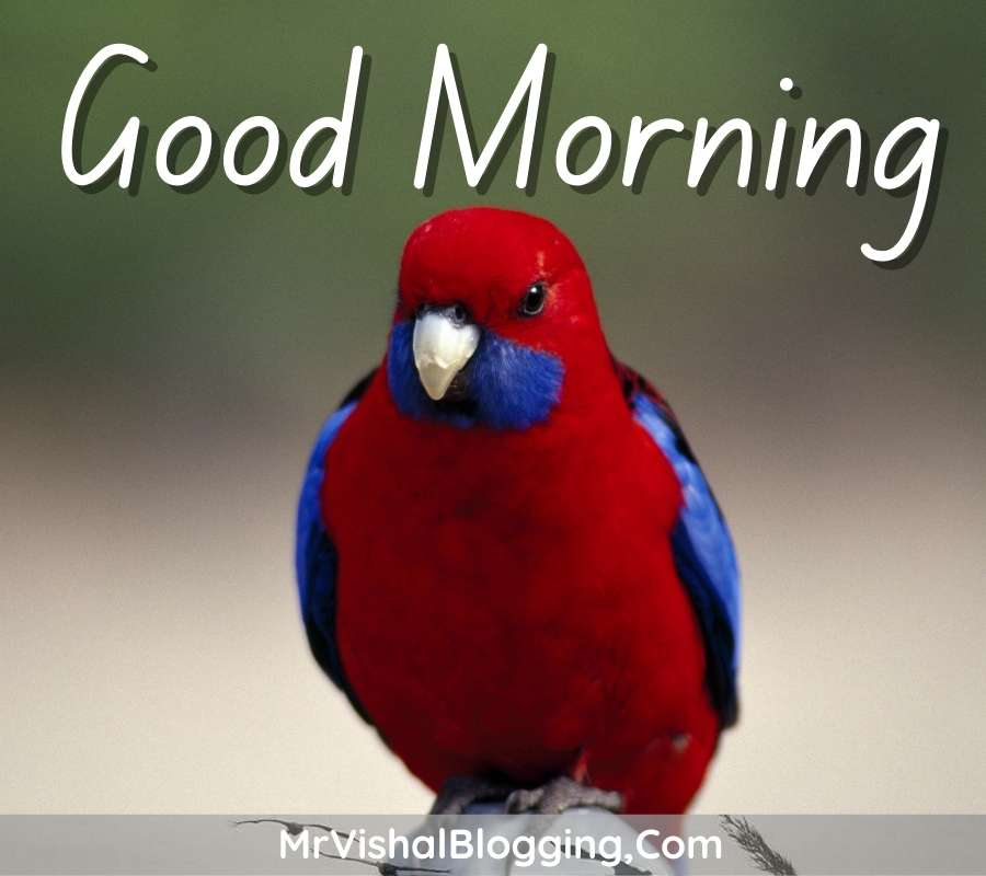 gd morning photos download with birds for facebook