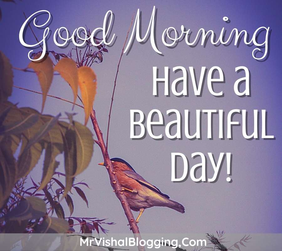 gd morning images download with birds for instagram