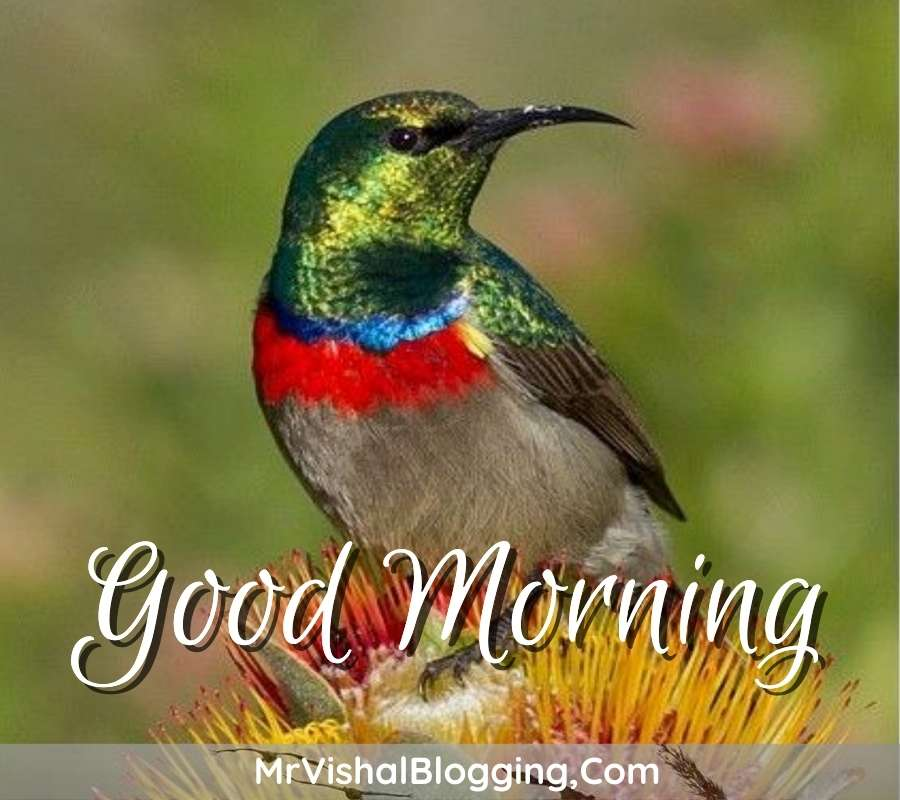 gud morning pics download with birds download