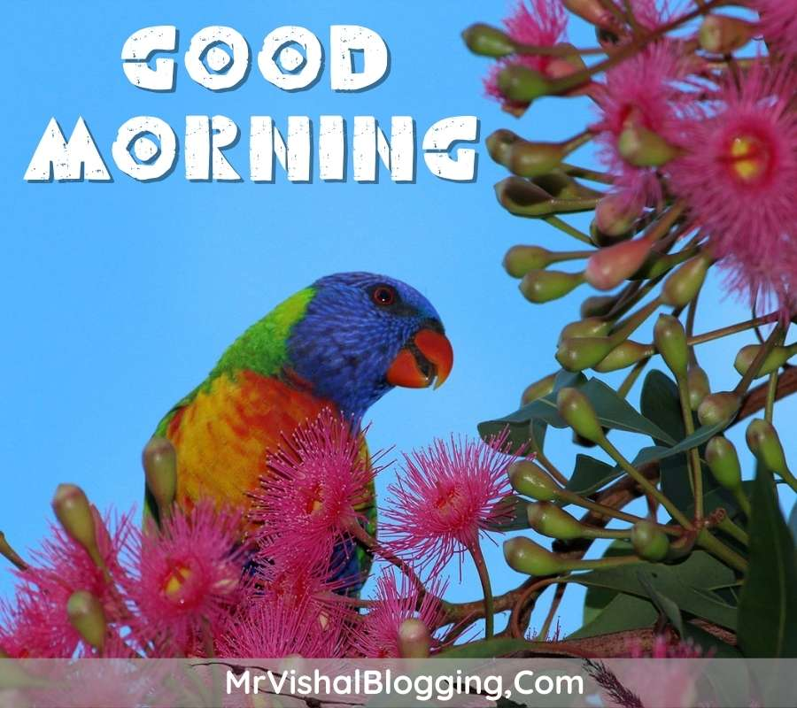 gud morning pictures download with birds for whatsapp