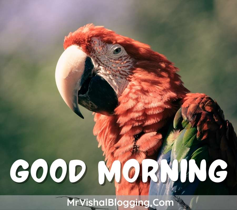 gud morning photos download with birds for facebook