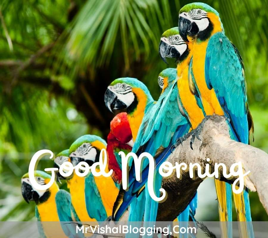 gud morning images download with birds for instagram