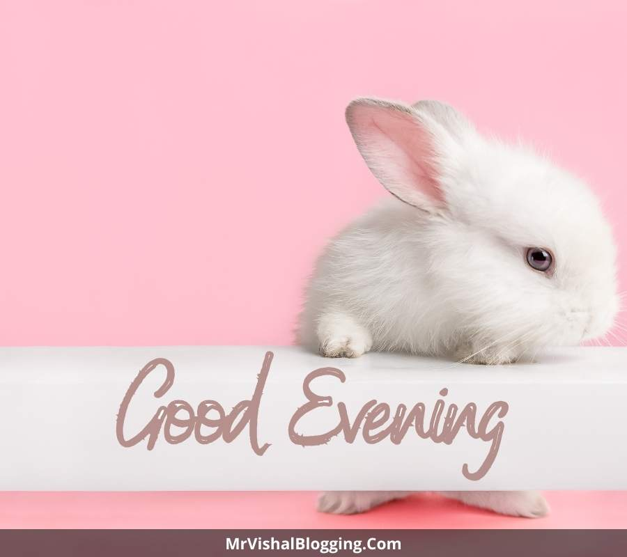 good evening cute images