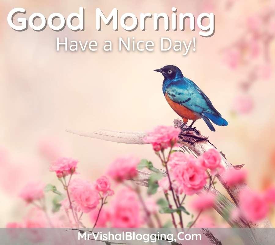 good morning images birds download