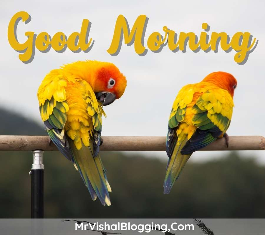 gud morning pictures download with birds for whatsapp free
