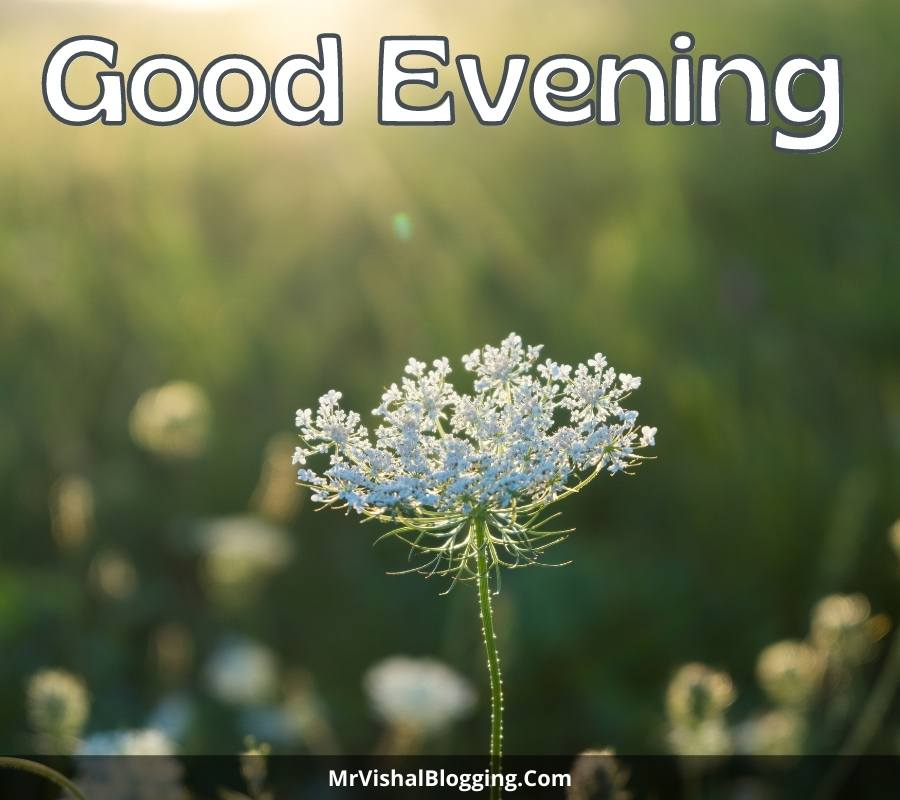 good evening photos with flowers