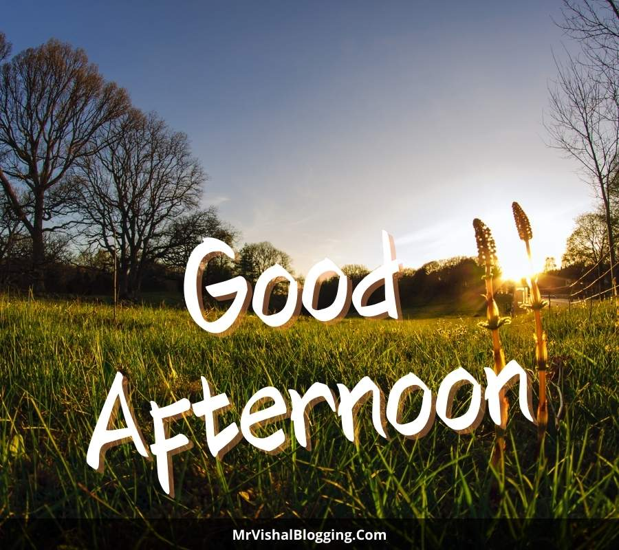 good afternoon photos download