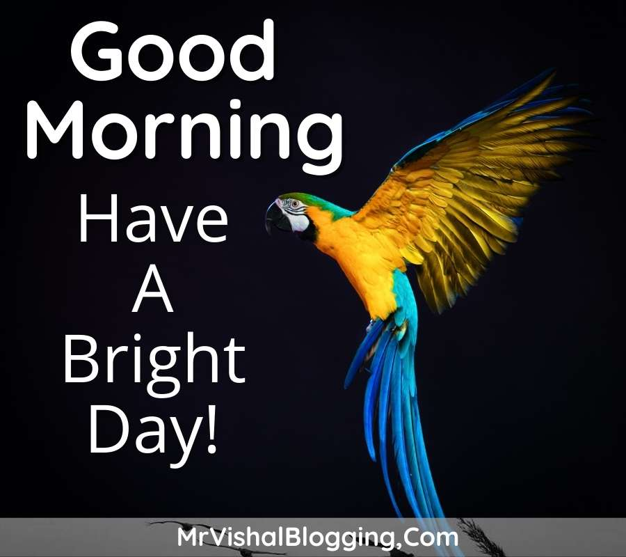 good morning images with flowers and birds download