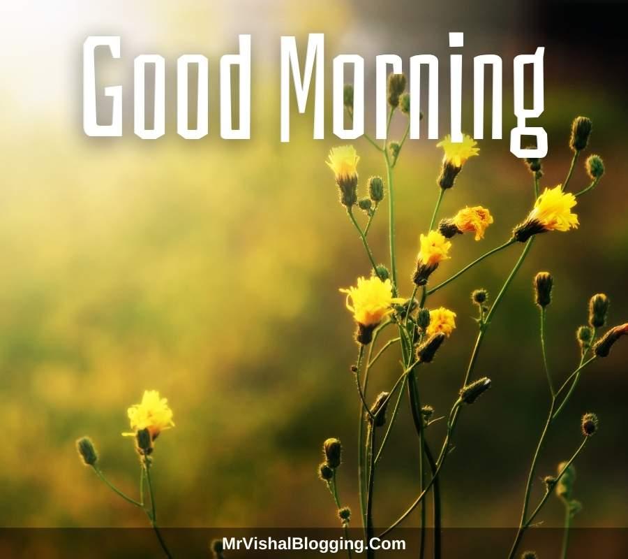 good morning pics hd