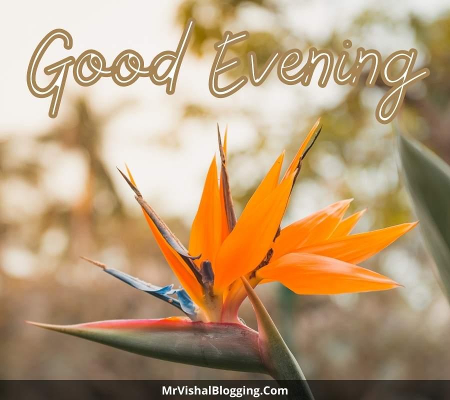 good evening beautiful images