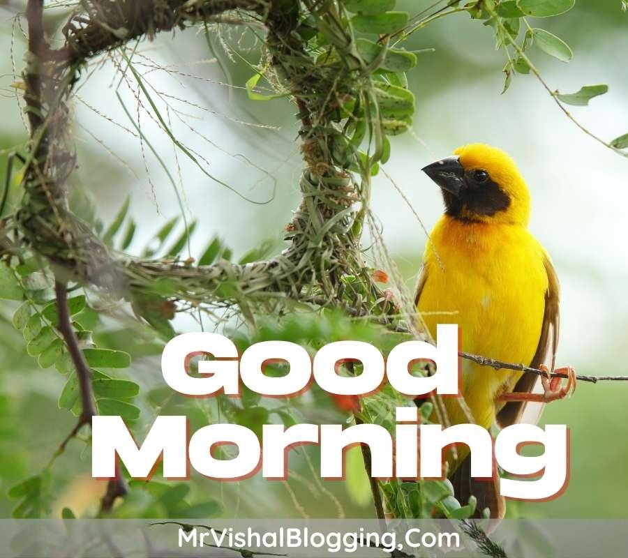 good morning birds pics download