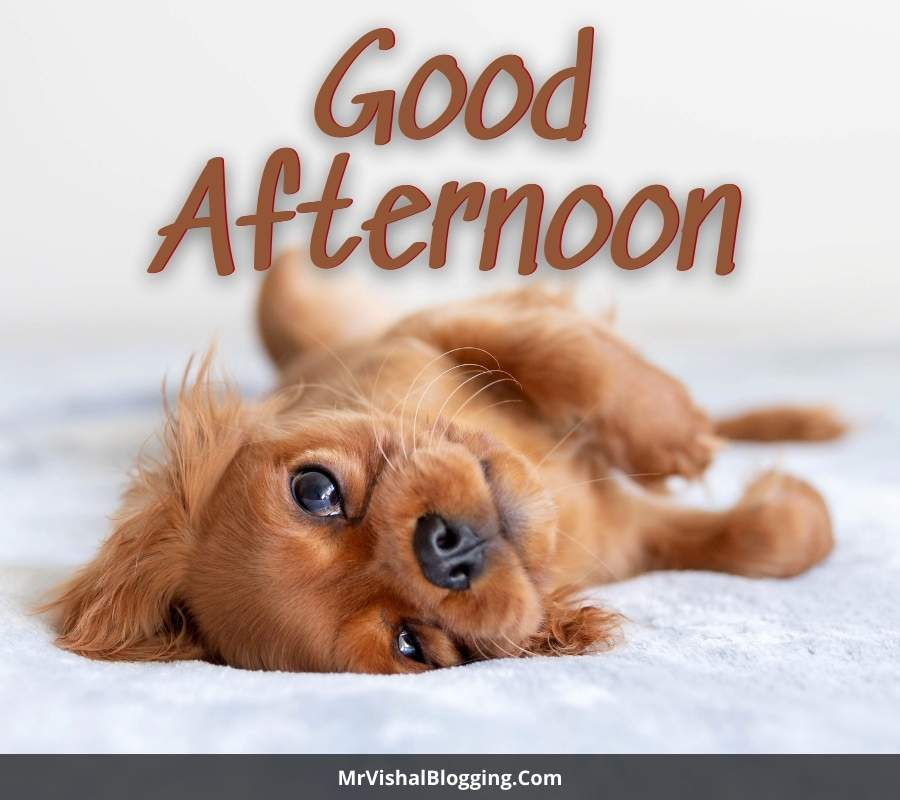 good afternoon cute pics