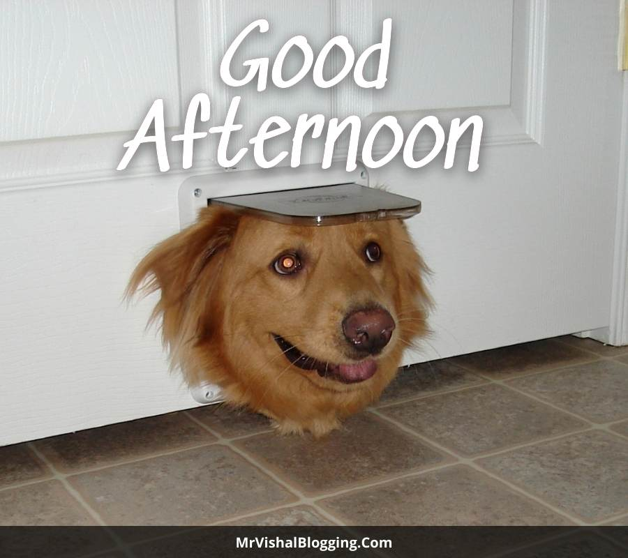 good afternoon pictures funny
