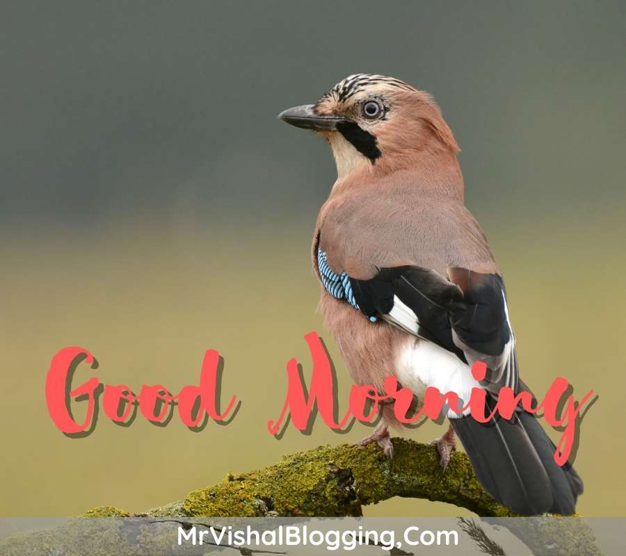 good morning pics with flowers and birds