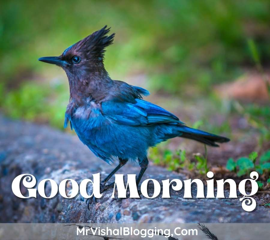 good morning pictures flowers birds