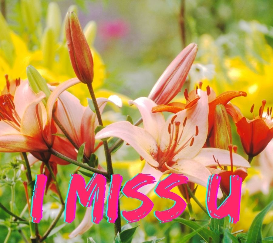 Miss U HD Pictures Download For Facebook
