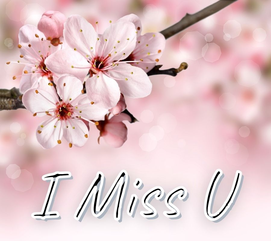 I Miss You HD Pictures with Flowers Download Free For Whatsapp