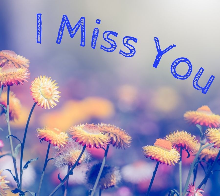 I Miss You HD Photos with Flowers Download Free For Whatsapp