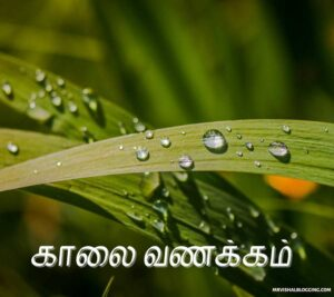 good morning images in tamil for whatsapp